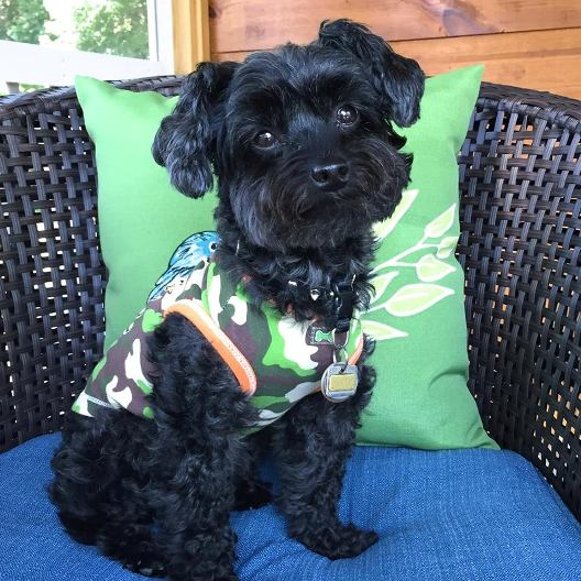 Yorkie Poo The Complete Owners Guide To The Yorkie Poo Breed Of Dog