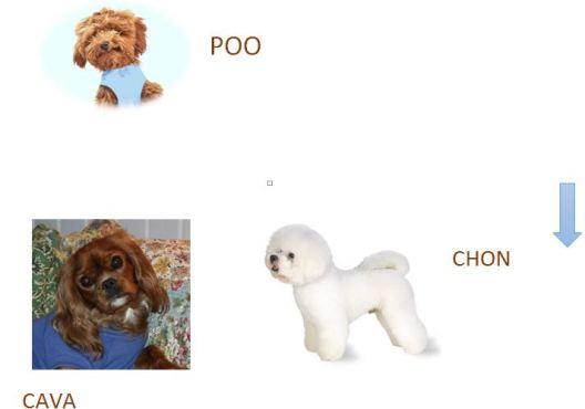 Cava, Poo and Chon
