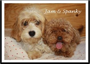 Jam and Spanky