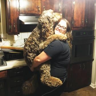 weimardoodle with owner