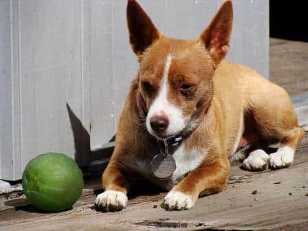 Quita the Chigi dog