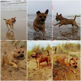 puggerdale dogs
